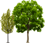 Two tree illustrations